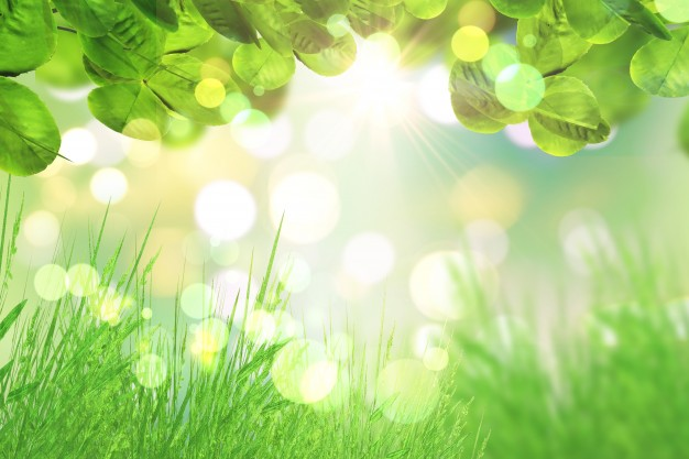 hojas-verdes-y-cesped
